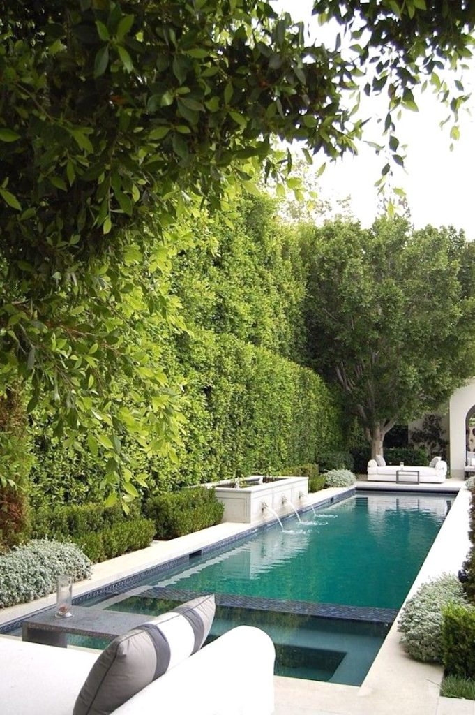 Backyard ideas, Backyard garden, Backyard DIY, Backyard with pools, Backyard on a budget, Backyard lighting, Backyard privacy, backyard shrubs