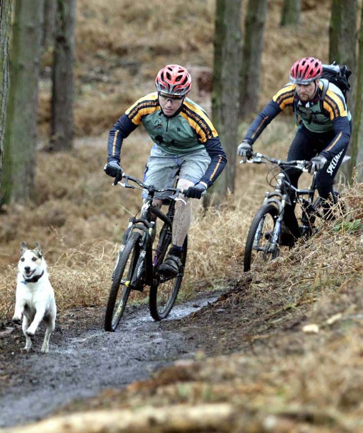 Benefits of exercise, exercise with dog workouts, fitness exercise with dog, exercise tips with dog, cycling with dog, exercise ideas with dog, fun exercise with dog