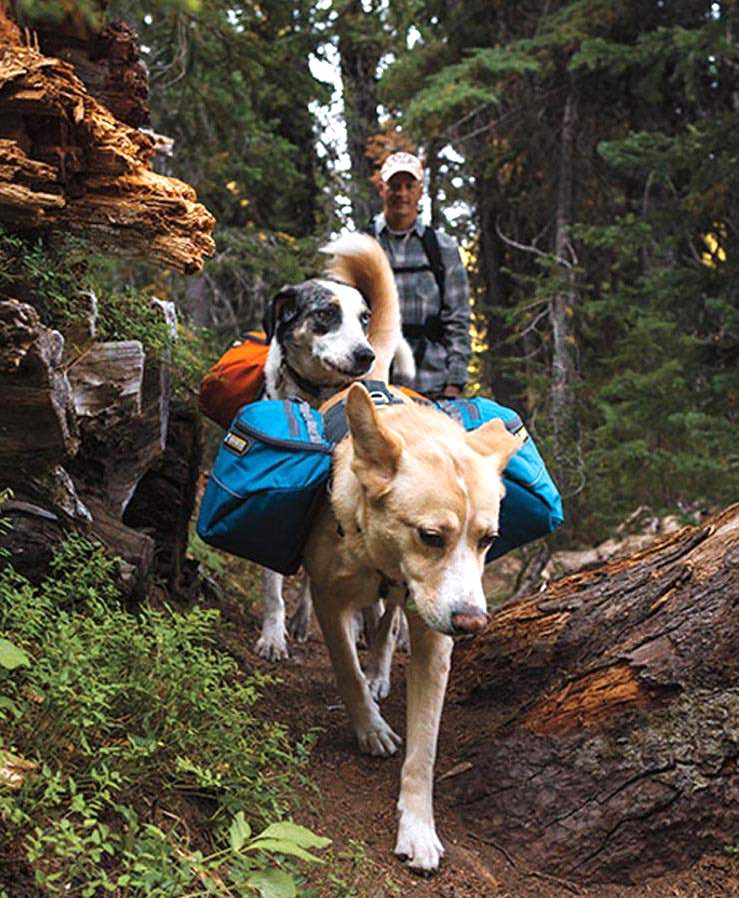 Benefits of exercise, exercise with dog workouts, fitness exercise with dog, exercise tips with dog, hiking with dog, running exercise with dog, exercise ideas with dog, fun exercise with dog