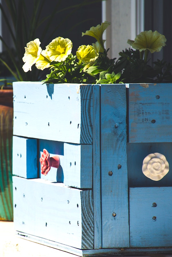 Raised bed of flowers in blue crate