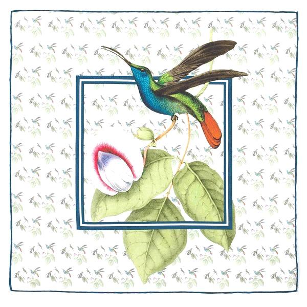 Hummingbird Swainson pocket square